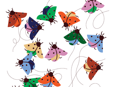 Coccinella illustrator illustraion