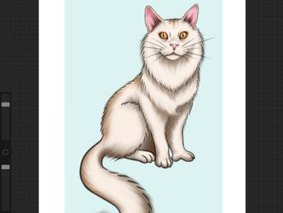 Pet portrait blue beige orange art design illustration feline animal meow kitty artwork digital digitalart procreate mainecooncat cat mainecoon portrait pet