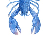 Blue Lobster watercolor