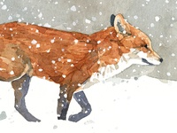 Fox in Snow watercolor