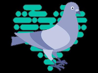 Pigeon bird pigeon
