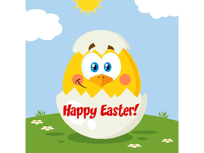 Easter  Chick easter chiken post card greeting holiday hittoon vector graphics design illustration mascot character cartoon chick animal