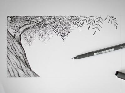 Olive tree sketch tree olive illustration pen liner
