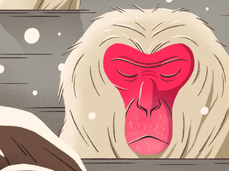 Coping japanese macaque monkey animal gradient photoshop character texture design flat illustration