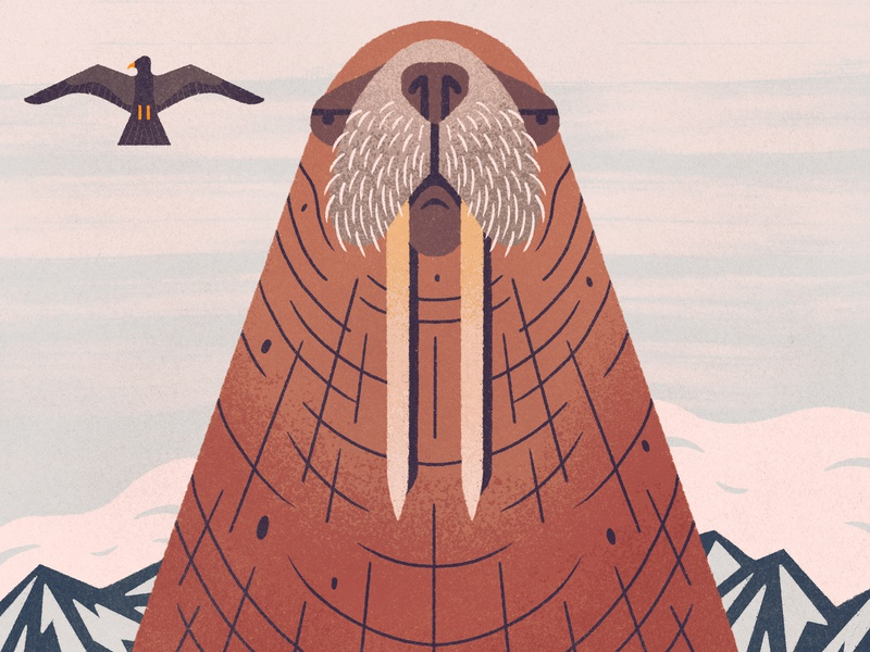 Lord Blubber mountains procreate arctic seagull walrus animal geometric texture character design flat illustration