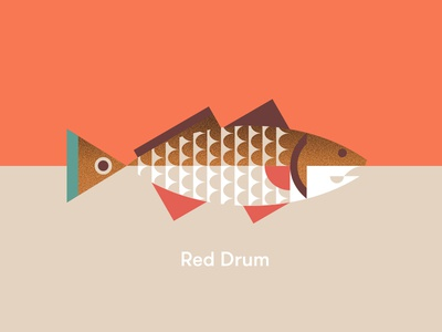 Red Drum south carolina bass drum red tail spot fish