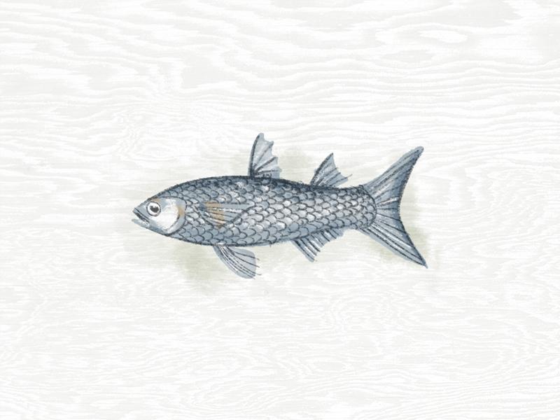 Illustration III procreate fish illustration