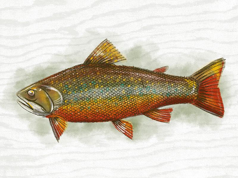 Fish illustration kendrickkidd series4