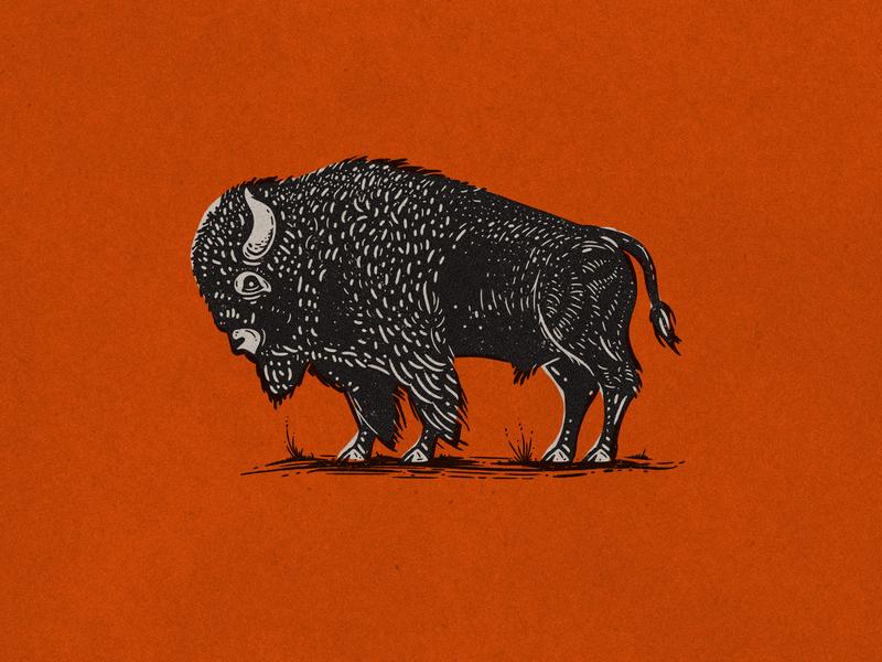 Illustration etching retro supply co bison illustration