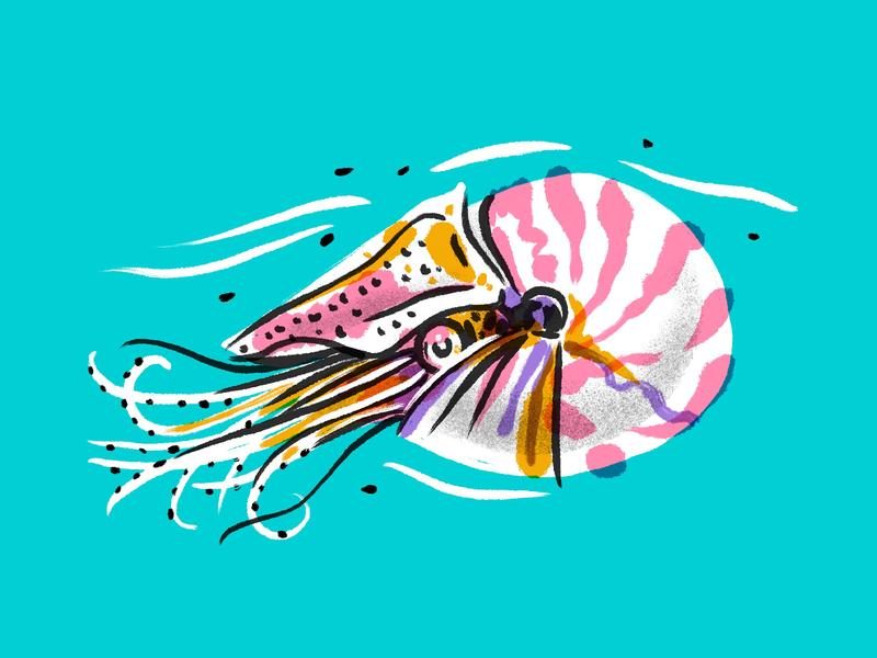 illustration practice tropical illustration mollusk