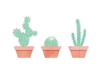 Cacti cacti cactus plants illustration hot desert