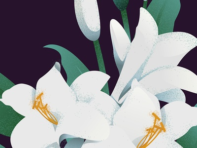Spring Lillies