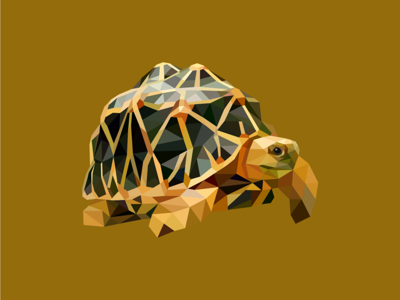 Turtle reptile animal art vector sea amphibian animal geometric illustartion abstract turtle
