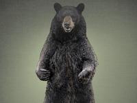 A Bear 1 (Layered PSD) Illustration