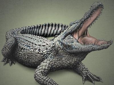 A Gator 1 (Layered PSD) Illustration gator american alligator alligator layered psd