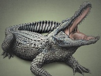 A Gator 1 (Layered PSD) Illustration