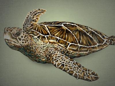 A Seaturtle 2  (Layered PSD) Illustration seaturtle green seaturtle layered psd turtle