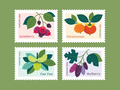 Native Fruits Postage Stamp Concept usps postage stamp postage stamp mulberry persimmon paw paw juneberry concept digital illustration fruit native plants illustrator