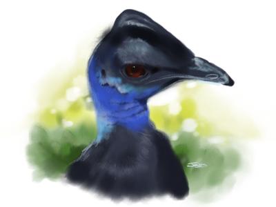 Ferocious cassowary