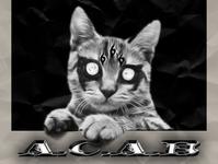 chrome type acab cats chrome type album covers album cover art album cover design album cover poster design poster art poster typo animation type design typo branding design icon logo illustration