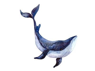 Watercolor Whale wildlife wild animal fishes childrens illustration design art nature sea water fish whales whale watercolor illustrator illustration animal illustrations