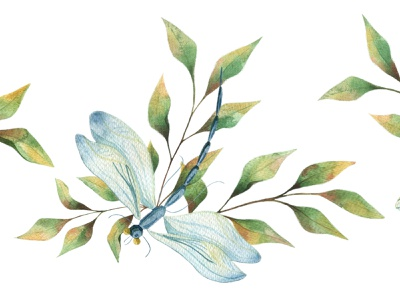 Dragonfly wallpaper insects watercolor illustration botany nature design art watercolour dragonfly branding watercolor animal illustrator illustration illustrations