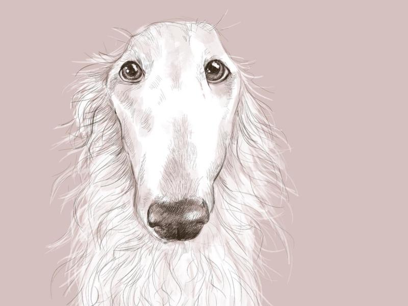 Long Face animal art pink drawing procreateapp portrait portrait art pets digital art dog digital painting design illustration dog illustration borzoi