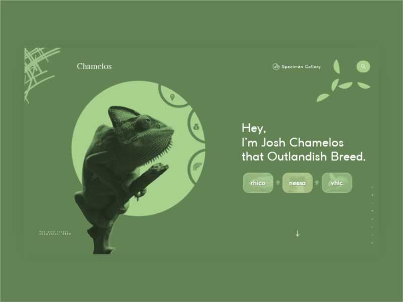 chamelos dribbble best shot dribbble world best shot best design creative chameleon africa web design colors branding august adobe xd adobe typography ui design website animals logo animal