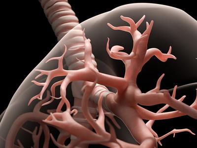 Close-up of human lung