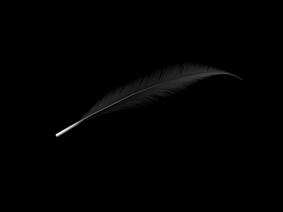 000_PBP_BlackFeather bird new zealand nz all blacks black feather practice c4d