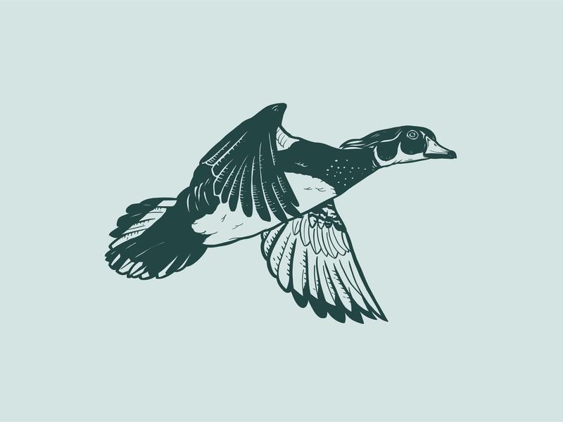 Wood Duck Illustration