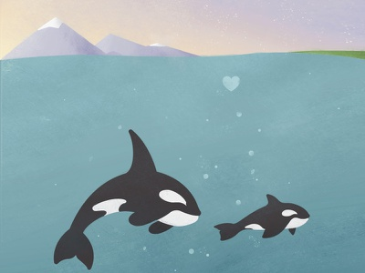 Orca Family upper left washington san juan islands seattle pnw orca whale