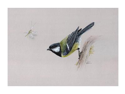 Great Tit природа открытка энциклопедия illustration интерьер design винтаж серый синица птица