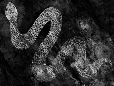 Snake black and white wip experiment quick sketch texture scales snake