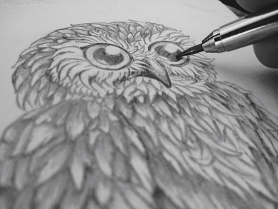 Owl Sketch sketch sketch book owl graphite illustration