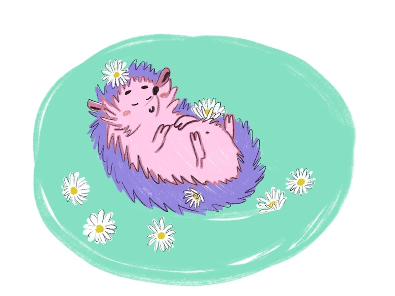 Hedgehog in a daisies