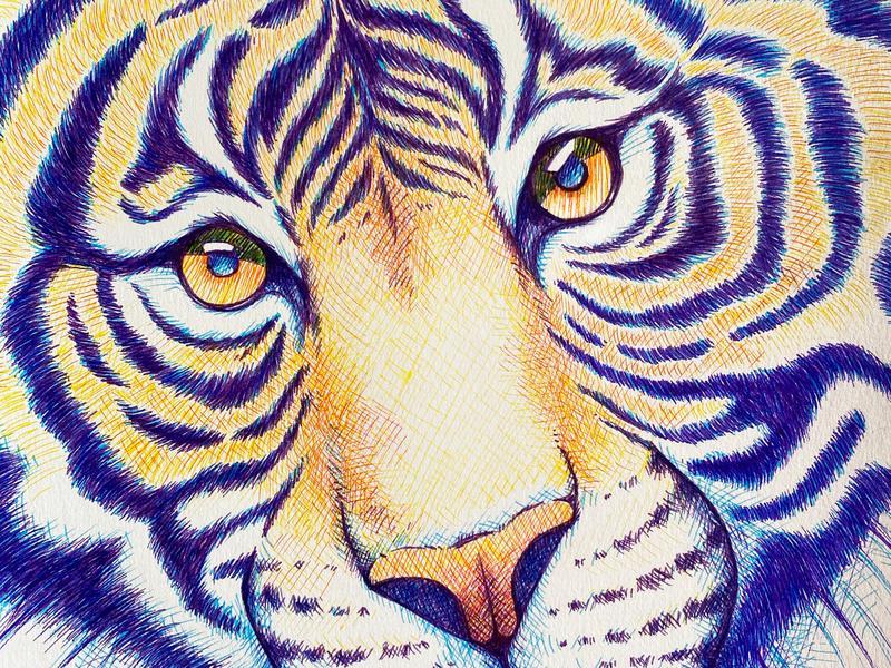 Colorful tiger crosshatching detail big cat eyes markers colorful tiger drawing pen drawing illustration animal illustration animal art
