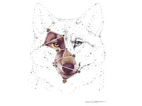 Wolf constellation digital art constellations lupus astrology stars pen drawing drawing animal illustration animal art constellation wolf