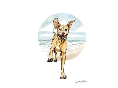 Kona the Viszla cute animal animals illustration watercolor puppy pet portrait pen drawing drawing animal illustration animal art