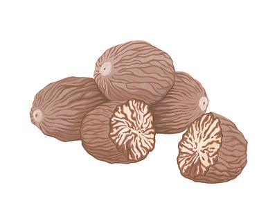 Nutmeg brown painting spice artwork graphic fruit traditional art handmade nutmeg botanical gouache illustration