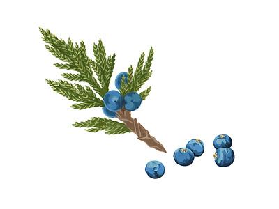 Juniper green blue gouache juniper traditional art painting illustration handmade graphic botanical artwork