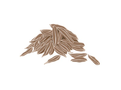 Caraway brown spice traditional art painting illustration handmade graphic gouache botanical artwork caraway