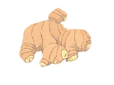 Ginger ginger spice traditional art painting illustration handmade graphic gouache botanical artwork