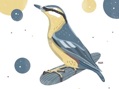 Kleiber illustration bird drawing drawings drawing nature art procreate illustration procreate nature birds bird illustration yellow blue kleiber bird