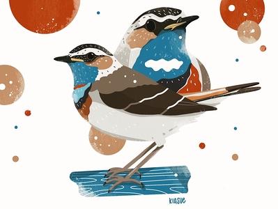 blaukehlchen procreate drawing drawing procreate illustration procreateapp procreate artwork art illustration kiasue bird