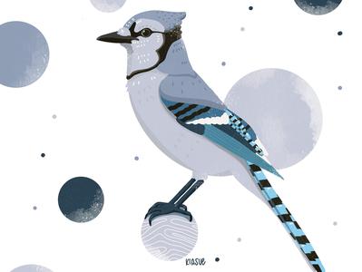 Blauhäher blauhäher apple pencil drawing draw procreate art procreate illustration procreate drawing procreate illustration kiasue bird illustration bird