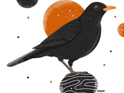 Amsel amsel kiasue illustrators procreate drawing procreate ipadpro draw drawing artwork illustration art bird illustration illustration bird