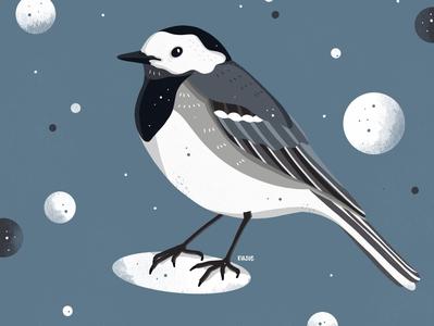 bachstelze procreate illustration procreate illustration digital drawing art artwork illustration art kiasue illustration illustrator bird bachstelze