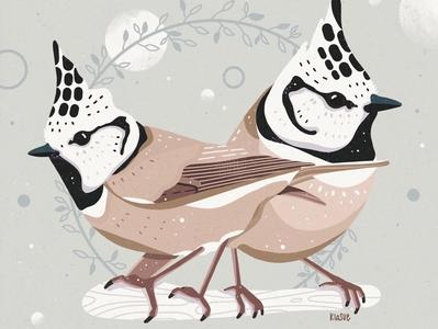 Haubenmeise kiasue procreate art procreate app procreate floral haubenmeise illustrator digital illustration digital illustration bird