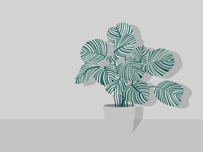 Calathea orbifolia 2.0 plant vectorart minimal illustration flat illustration minimal vector lineart illustration flat design